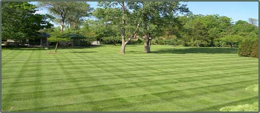 Personalized Lawn can take care of all of your Property Maintenance